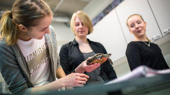 Kannuksen eläinlääketieteen lukion opiskelijat tekevät terveystarkastuksen kultakilpikonnalle.