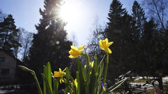 Keväinen auringonpaiste