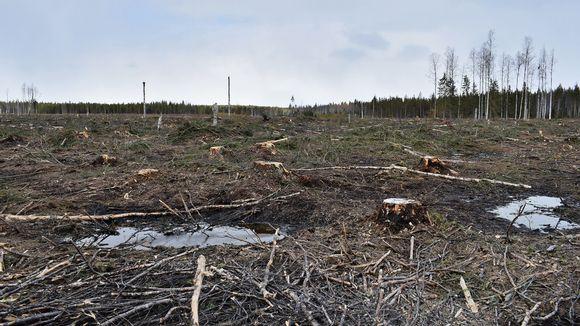 Metsähakkuita Kainuussa keväällä 2017.
