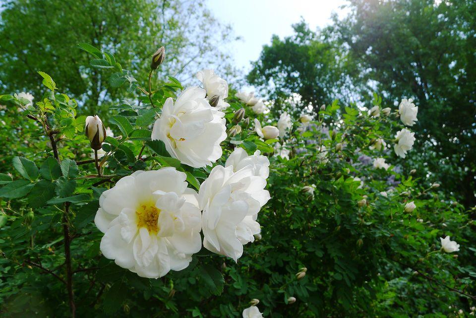 Reminder: Finland's Midsummer holiday brings partial