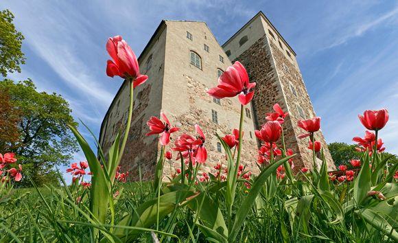 Turun linna ja kukkia.