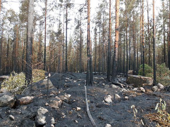 Maastopalon aiheuttamaa tuhoa Pyhärannassa.