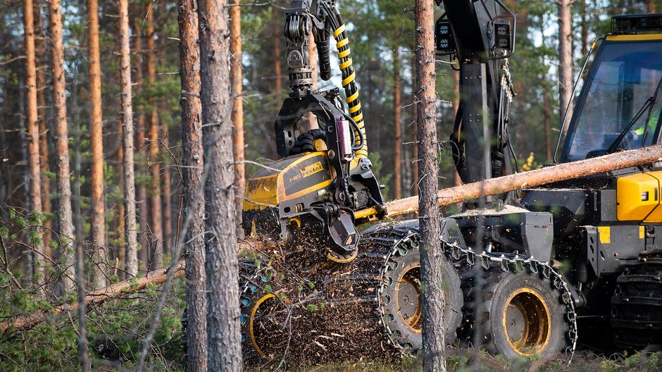 Eye in the sky: Finland monitors logging by satellite