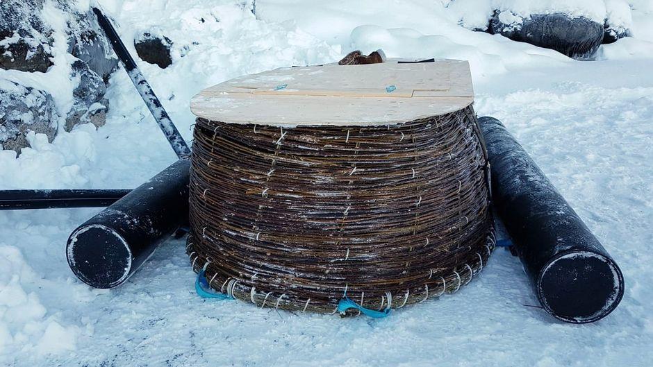 Saimaannorpan keinopesä, joka on punottu pajusta. Pesän kansi on puuta.