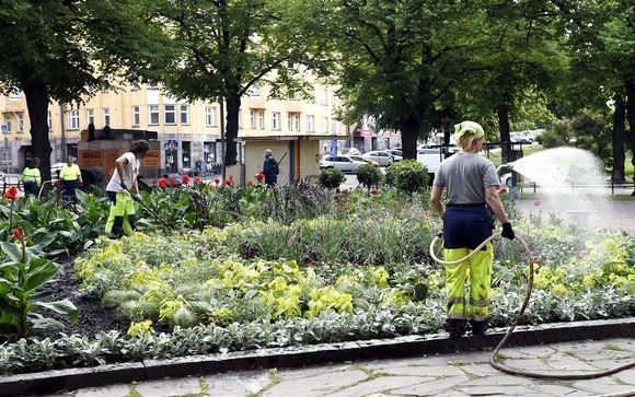 Kaupungin puistotyöntekijöitä kastelemassa istutuksia Helsingin Kalliossa 20. kesäkuuta.