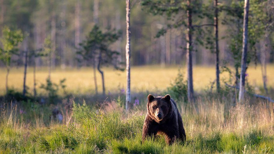 Finland named best wildlife travel destination in 2019