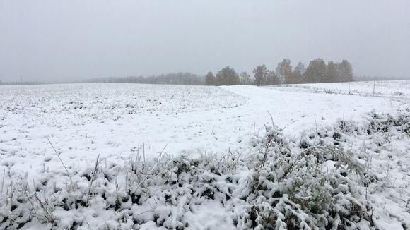 lunta pellolla