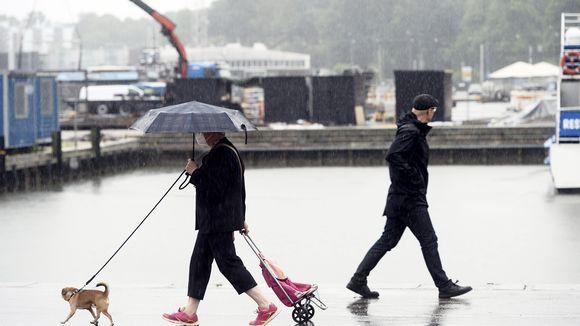 Koiranulkoiluttaja sateisessa Helsingissä.