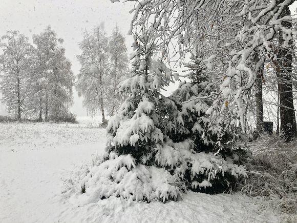 Lunta satoi sakeasti Alavudella, Etelä-Pohjanmaalla päivällä 18. lokakuuta.