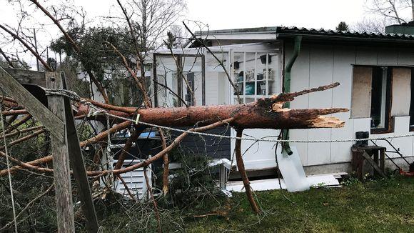 Kuvassa on Liisa-myrskyn Luvialla 19. marraskuuta kaatama puu.