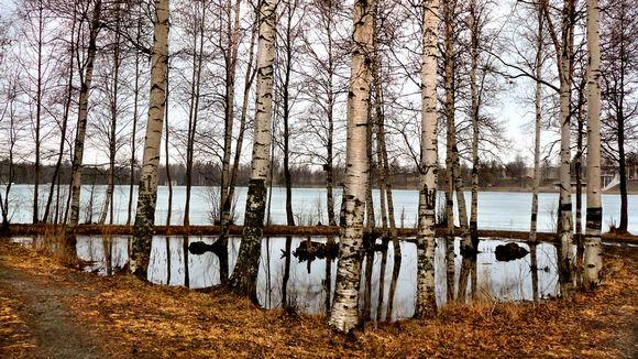 Kaukajärvi on osittain jäässä. Kevät on jo pitkällä.