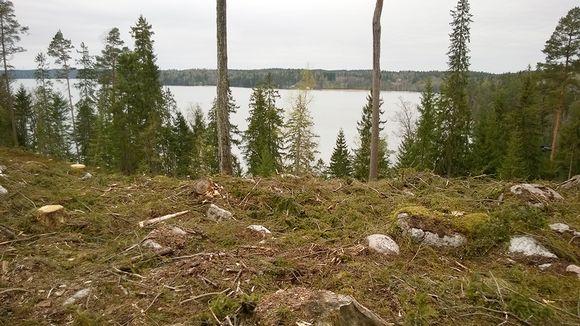 Hakattua metsää Hvitträskissä.