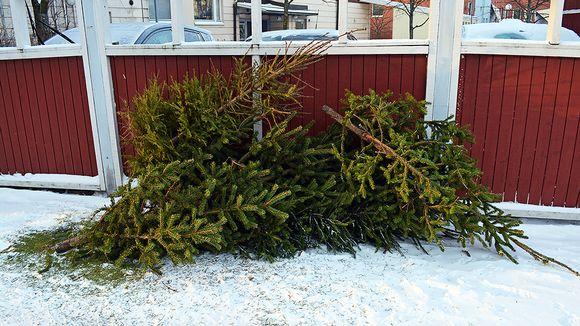 Joulukuusia roskakatoksessa