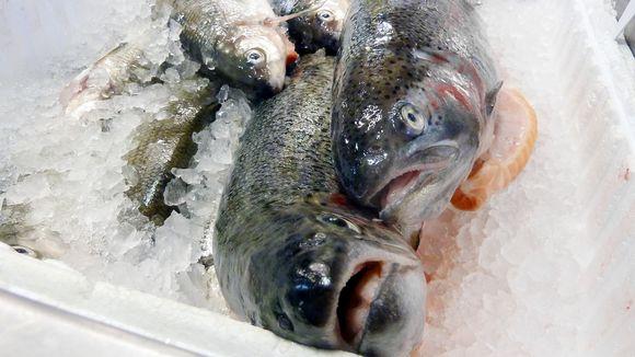 Kaloja Lappeenrannan kauppahallin kalatiskillä.