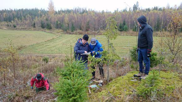 Avalon Mineralsin ja Nortec Mineralsin alihankkijan GeoConsultingin tiimi kartoittaa Satulinmäen kultaesiintymää Hämeessä.