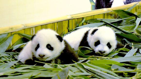 finlands pandas සඳහා පින්තුර ප්රතිඵල