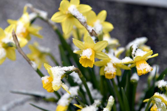 Etelä-Suomeen satoi kiirastorstain aamuna lunta,