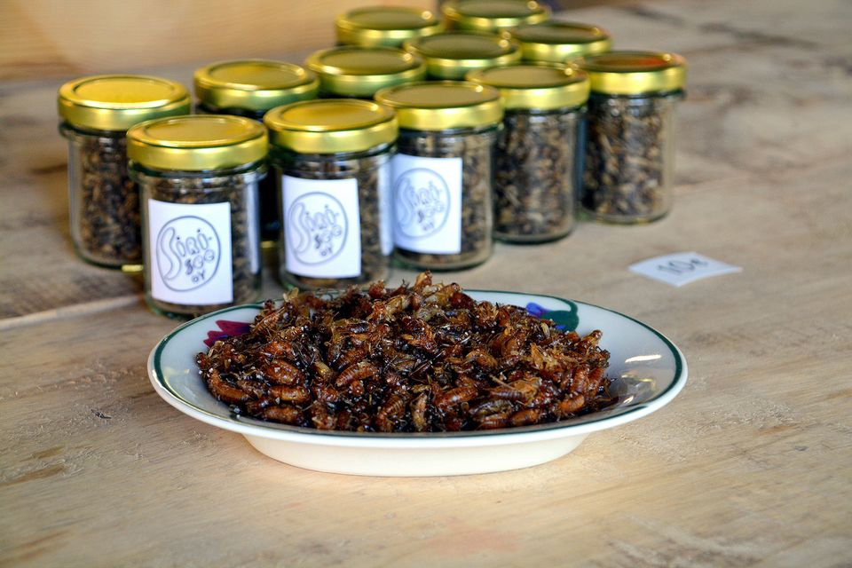 Insects and bugs approved for use as food products in Finland   Yle