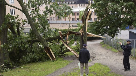 Mies kuvaa Kiira-rajuilman lauantai-iltana katkomia puita Kaisaniemen puistossa Helsingissä sunnuntaiaamuna 13. elokuuta.