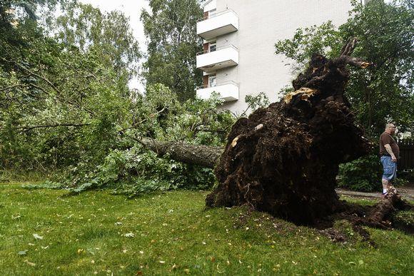 Kiira-rajuilman lauantai-iltana kaatama puu Lielahdentiellä Lauttasaaressa Helsingissä sunnuntaiaamuna 13. elokuuta.