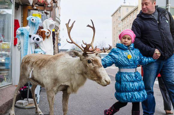 Turistikaupan täytetty poro Töölössä.