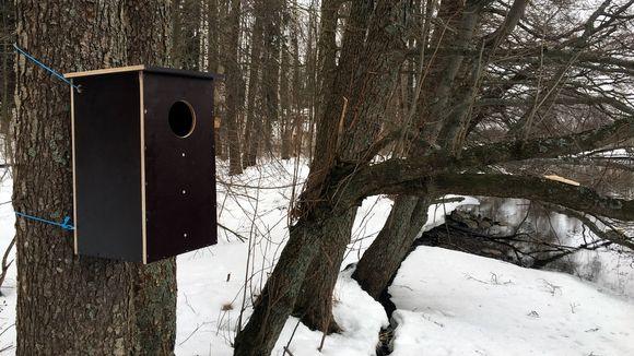 Linnunpönttö puussa.