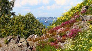 Vallisaaren kukkivia kallioita