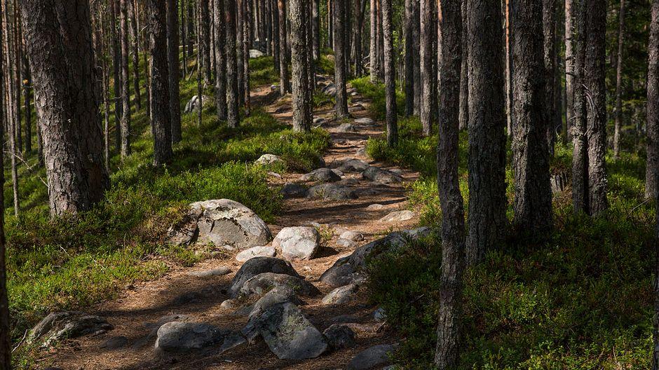 Kivikkoinen polku Tiilikkajärven kansallispuistossa.
