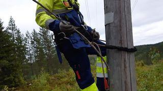 Oksa, joka katkaisi sähköt laajalta alueelta.