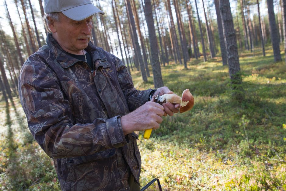 Polvijärveläinen Voitto Voutilainen puhdistaa herkkutattia.