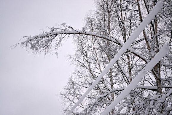 Lumisia oksia taipuneena sähkölinjojen päälle.