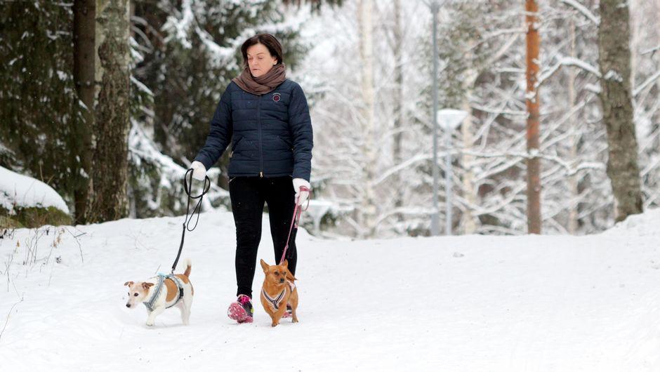 Pirjo Haapsaari-Loisti taluttaa kahta koiraansa