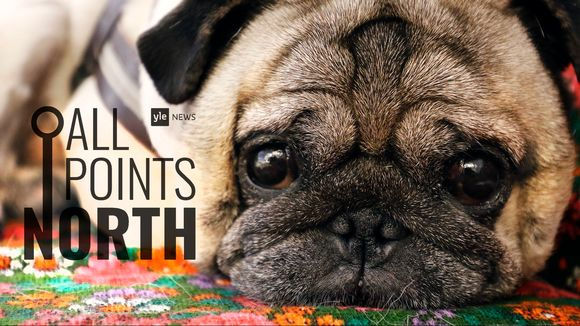 All Points North podcast logo featuring photo of dog