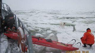 Sotku being rescued.