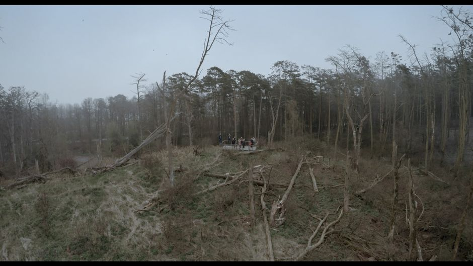 Acid-Forest-2.jpg