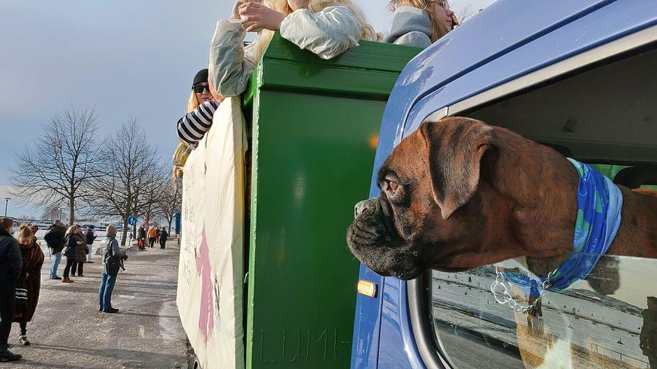 penkkarit novosti koira