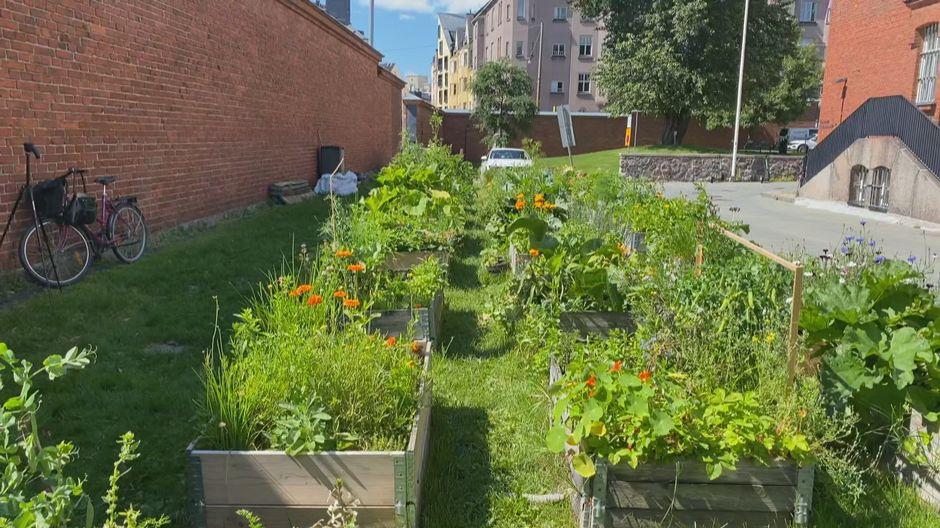 urbaani puutarha