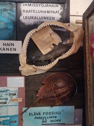 Kaunissaaren saaristolaismuseo, Pyhtää