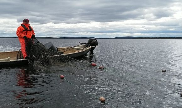 Risto Pyhäjärvi, meardi, Lokka-Porttipahta