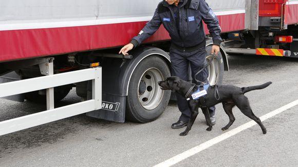 Tullimies koiran kanssa tarkastaa rekka-autoa.