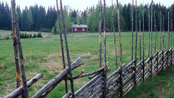 Pieni punainen talo metsän laidalla, peltoa edessä ja peltoa kiertää risuaita.