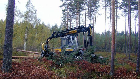 Metsäkone korjaa puuta metsässä.