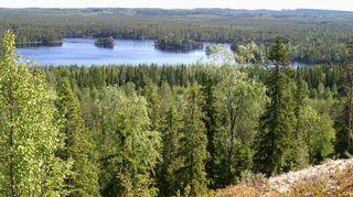 Kesäinen vaaramaisema. Metsää ja järvi.