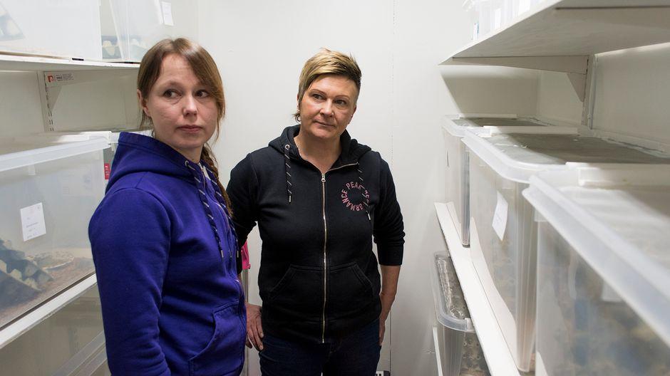 Tarja Kurikka ja Mia Koivumäki kasvattavat kotisirkkoja Sanginjoella Oulussa.