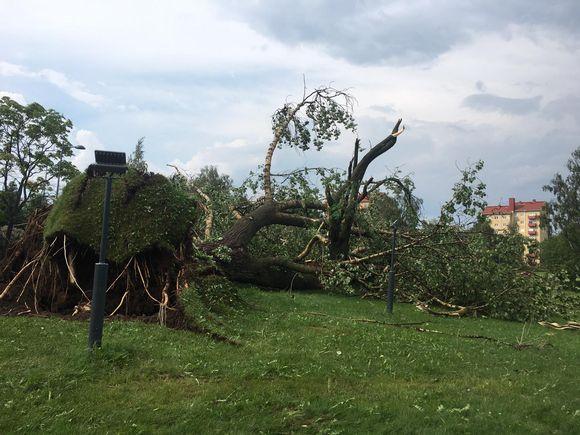 Myrskytuhoja Oulussa.