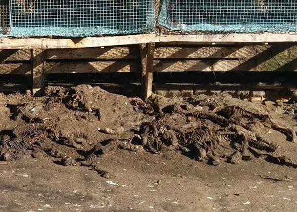 Oikeutta eläimille -järjestön kuva turkistarhalta.