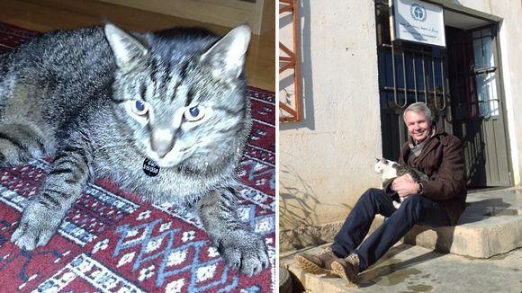 Bob kissa ja Pekka Haavisto afganistanilaisen kissan kanssa.