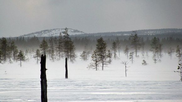 Arktinen tunnelma