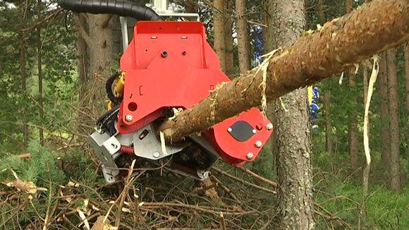 Metsäkoneen hakkuupää katkaisee puun runkoa