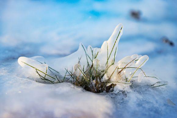 Jäätynyt ruohotupsu